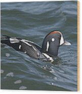 A Harlequin Duck Surfing Wood Print