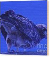 A Hawk Looks Back  Wood Print