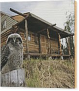 A Hawk Owl Sits On A Stump Near A Log Wood Print