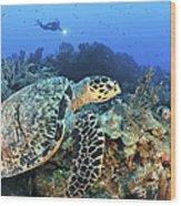 A Hawksbill Turtle Swims Wood Print