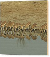 A Herd Of Impala Drinking At A Watering Wood Print
