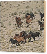 A Herd Of Wild Horses Gallops Wood Print