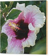 A Hibiscus Of A Different Kind Wood Print