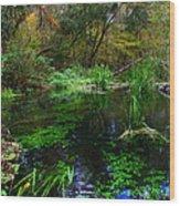 A Hint Of Fall At Ichnetucknee Springs Wood Print