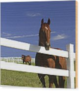 A Horse Peers Over A Fence Wood Print