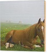 A Horse Sitting On The Grass In A Wood Print