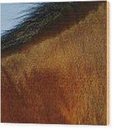 A Horses Neck And Mane, Seen So Close Wood Print