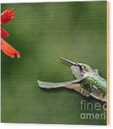 A Hummingbird With Dimension Wood Print