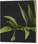 A Italian Ruscus Ruscus Aculeatus Wood Print