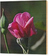 A Knockout Rose Wood Print