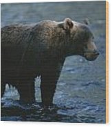 A Kodiak Brown Bear Hunts For Fish Wood Print by George F. Mobley