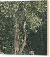 A Kodiak Brown Bear On The Bank Wood Print by George F. Mobley