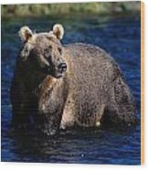 A Kodiak Brown Bear Wades In An Alaska Wood Print by George F. Mobley