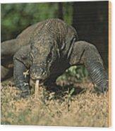 A Komodo Dragon Sensing The Air Wood Print