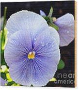 A Lavender Pansy Wood Print
