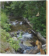 A Lazy Summer Day On Mt Spokane Wood Print