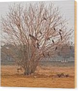 A Leafless Tree That Is Home To A Large Number Of Big Birds In The Middle Of A Ground Wood Print