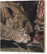 A Lion Feeding On The Carcass Of A Cape Wood Print