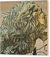 A Lion In Summer Wood Print