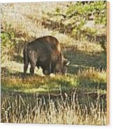 A Lone Bison In Yellowstone 9467 Wood Print