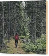 A Lone Hiker Enjoys A Wooded Trail Wood Print by Tim Laman