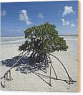 A Lone Mangrove Tree On A Sand Spit Wood Print by Scott S. Warren