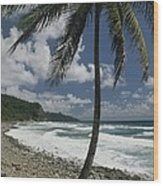 A Lone Palm Tree Grows From The Rocky Wood Print by Michael Melford