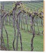 A Love Of Wine Wood Print