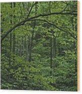 A Lush Green Eastern Woodland View.  An Wood Print