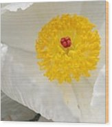 A Macro Of A White Mexican Poppy Flower Wood Print