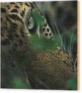 A Male Leopard Dozes Wood Print