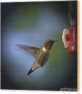 A Male Ruby-throated Hummingbird Wood Print