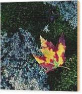 A Maple Leaf Lies On A Bed Of Moss Wood Print