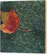 A Maple Leaf Lies On Emerald Moss Wood Print