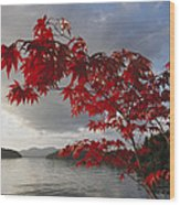 A Maple Tree In Fall Foliage Frames Wood Print