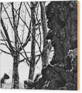 A Meeting Of Squirrels Wood Print