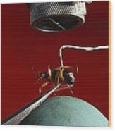 A Microphone Triggers A Flash Wood Print by James P. Blair