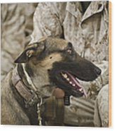 A Military Working Dog Sits At The Feet Wood Print by Stocktrek Images