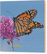 A Monarch Butterfly, Danaus Plexippus Wood Print by Darlyne A. Murawski