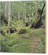A Mossy Woodland View On Queen Wood Print by Bill Curtsinger