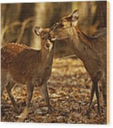 A Mother And Fawn Sika Deer Wood Print