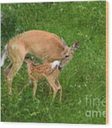 A Mother's Love - Doe And Fawn Wood Print