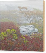 A Natural Garden At Dolly Sods Wilderness Area Wood Print