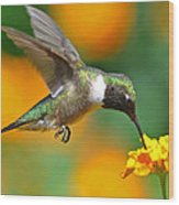 A Nice Hummer Wood Print by Jessie Dickson