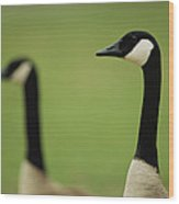 A Pair Of Canada Geese In Profile Wood Print