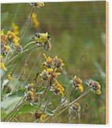 A Pair Of Goldfinches In Spokane Wood Print