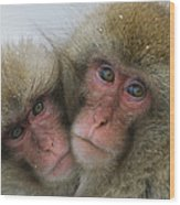 A Pair Of Japanese Macaques, Or Snow Wood Print