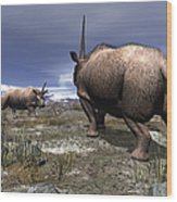 A Pair Of Male Elasmotherium Confront Wood Print