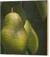 A Pair Of Pear On A Tree Wood Print