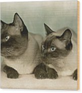 A Pair Of Siamese Cats Wood Print